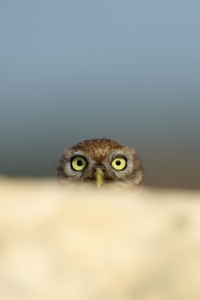 Business-to-business market research services - Research Associates owl